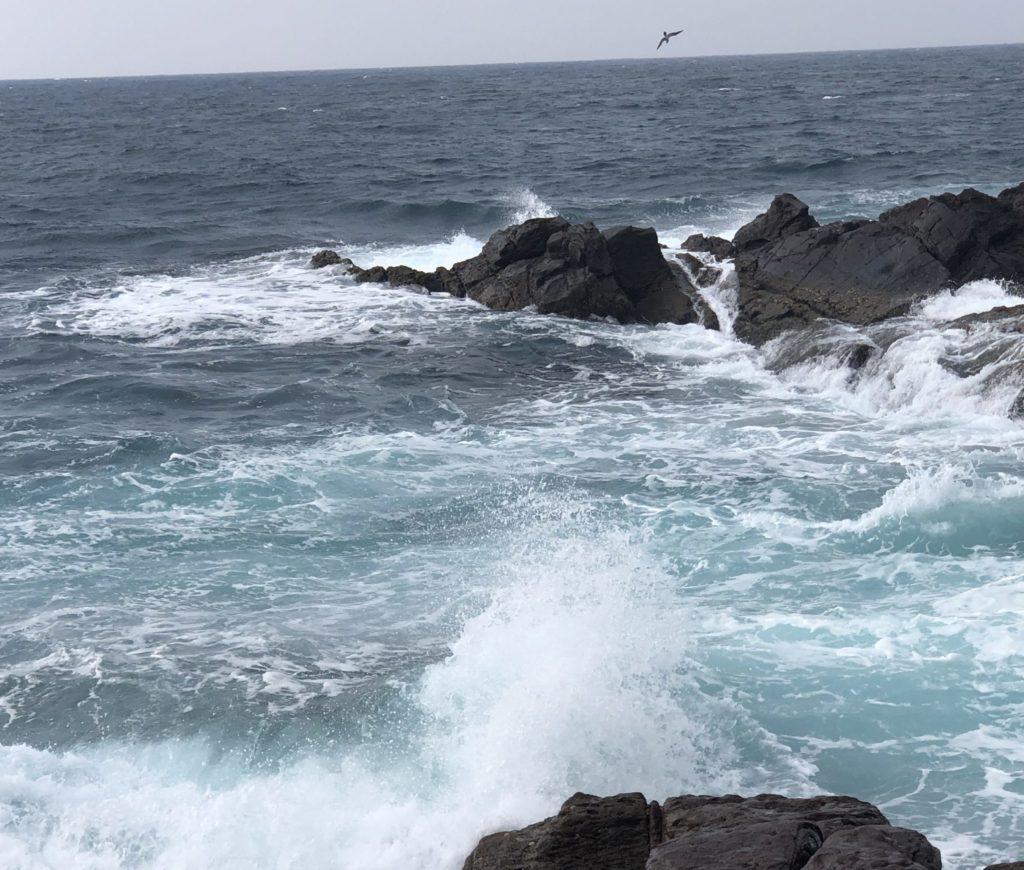地磯沖でベイトを食べる為海面に突っ込む鳥