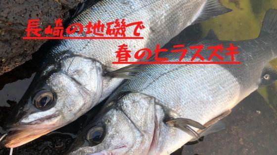 長崎地磯で釣ったヒラスズキ