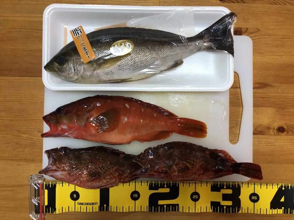 長崎地磯で釣れたロックフィッシュと買い足したイサキ