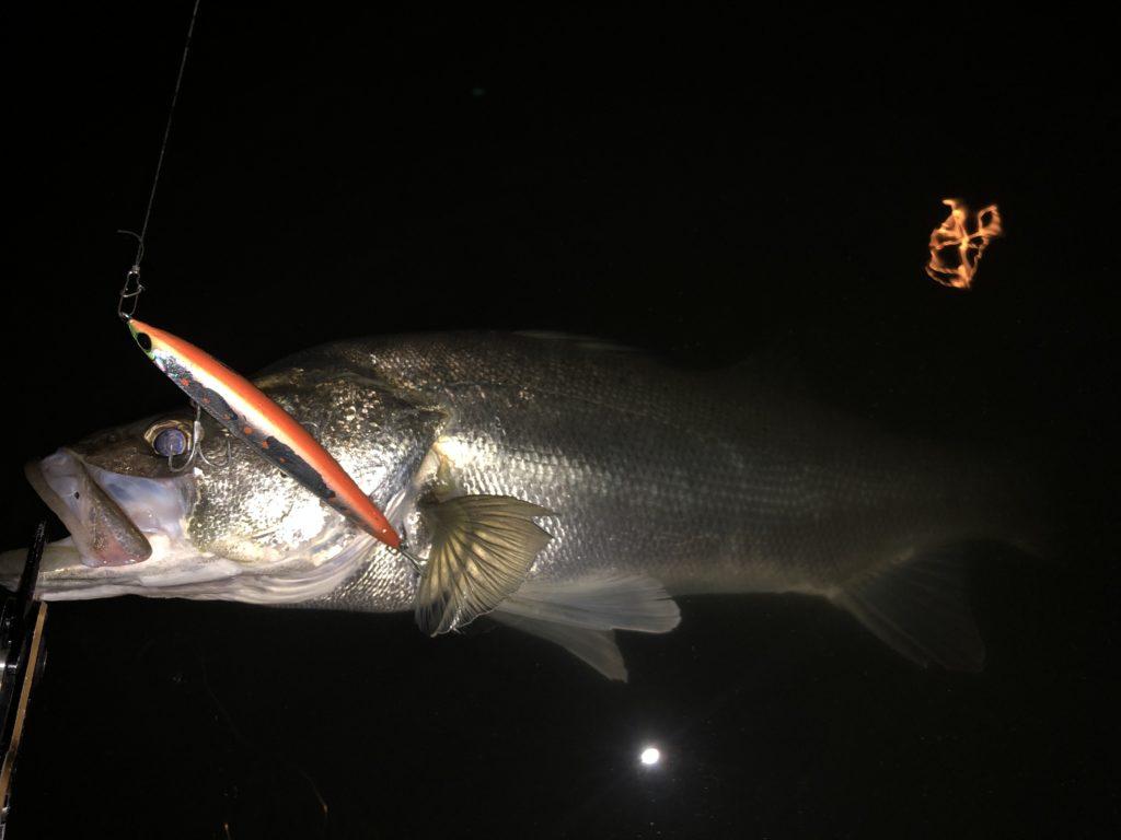 アスリート120SSPで釣った筑後川シーバス