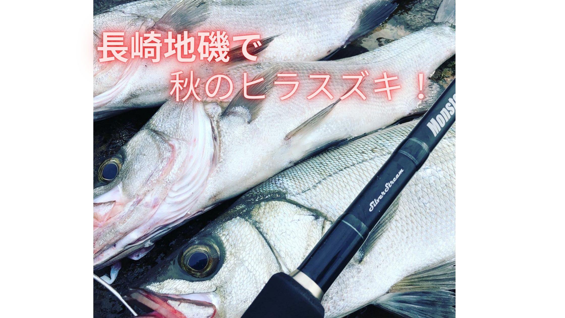 長崎地磯で釣れた秋のヒラスズキ