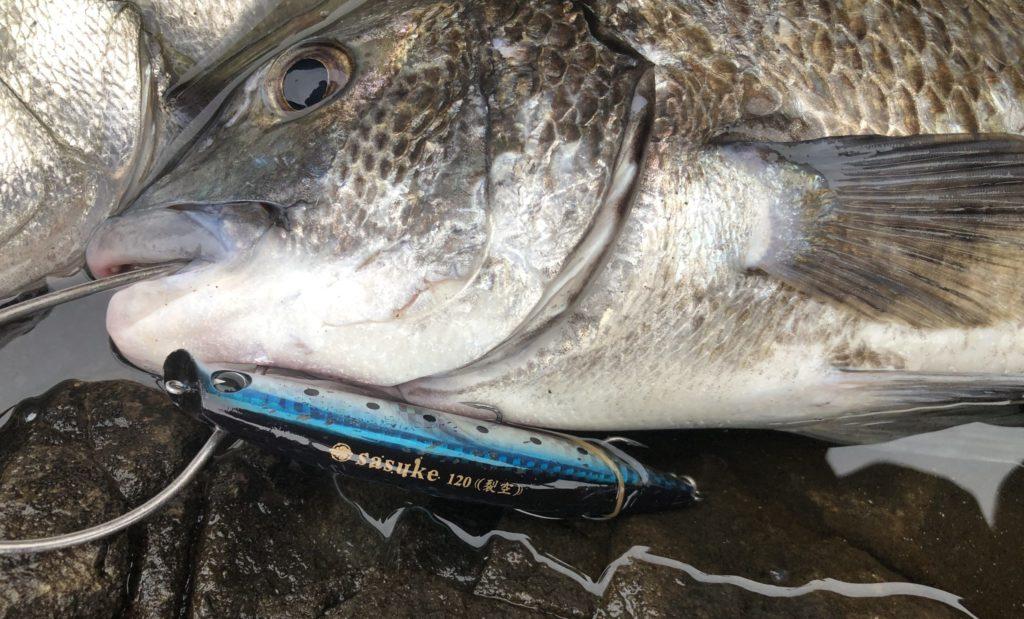 長崎地磯で釣れた黒鯛 サスケ裂空で釣れた黒鯛