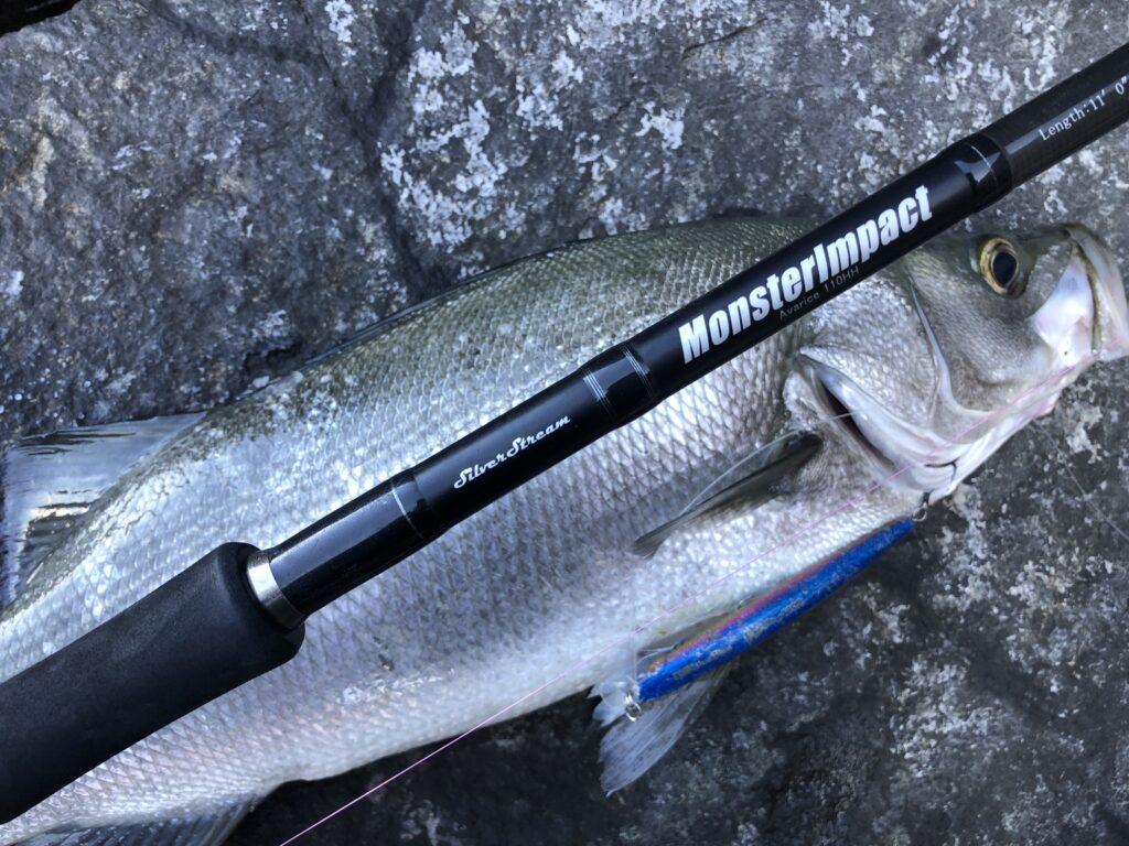 ブローウィン140Sで釣れたヒラスズキ モンスターインパクト110HHで釣れたヒラスズキ