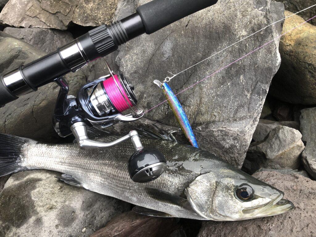 21ツインパワーSW4000XGで初めて釣れたヒラスズキ ブローウィン140Sで釣れたヒラスズキ